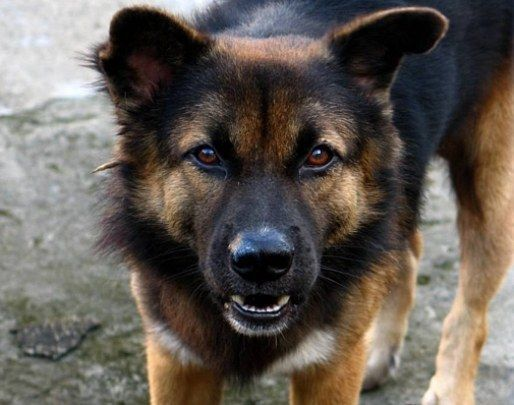 Що може бути за укус собаки