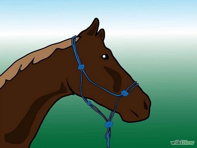 Як чистити коня