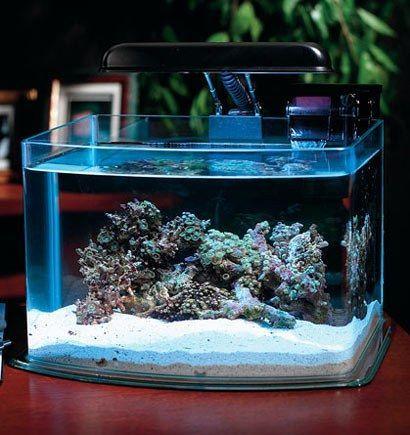 Як виміряти жорсткість води в акваріумі