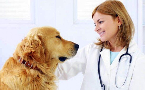 Як лікувати защемлення хребців у собаки
