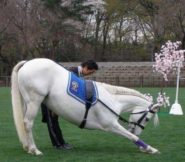 Як навчити коня робити уклін