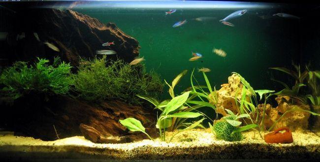 Як визначити жорсткість води в акваріумі