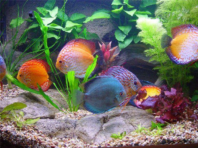 як зробити освітлення для акваріума