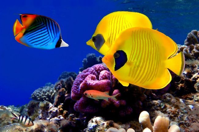 зробити акваріум