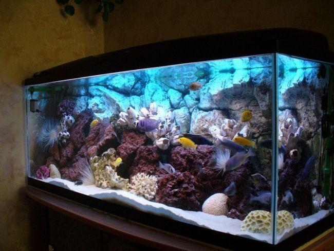 Як зробити акваріум чистим