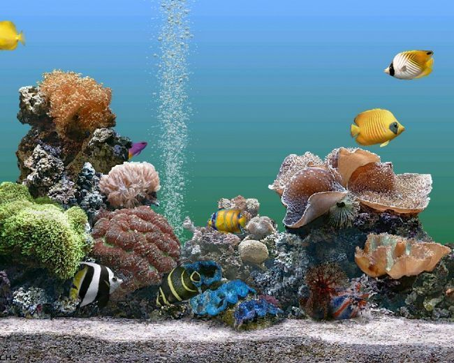 електричний сифон для акваріума своїми руками