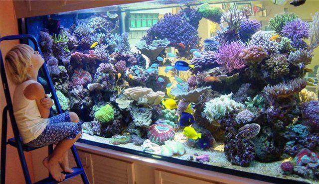 як влаштувати акваріум