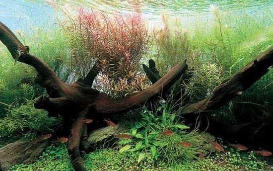 дізнатися про склад води в акваріумі