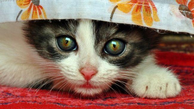 Як видалити запах від кішки