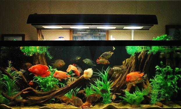 Як вибрати лампу для домашнього акваріума