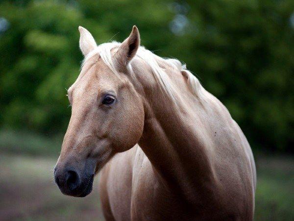 Як вибрати кінь