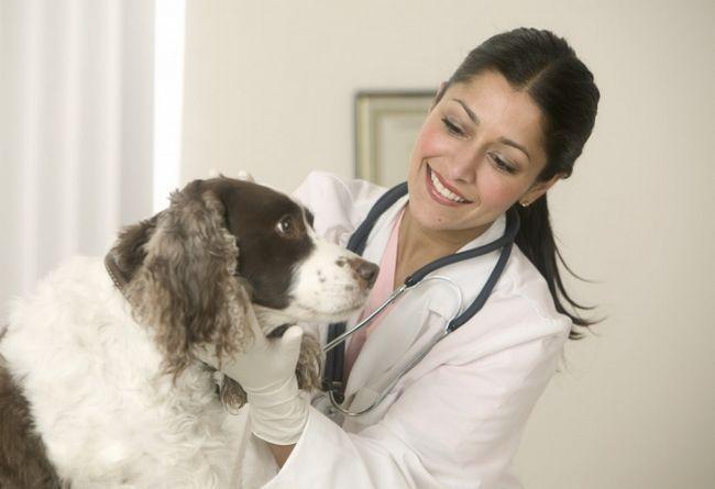 як правильно заповнити ветеринарний паспорт собаки