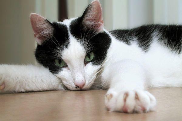 Кішка проявляє невдоволення - як позбутися від запаху?