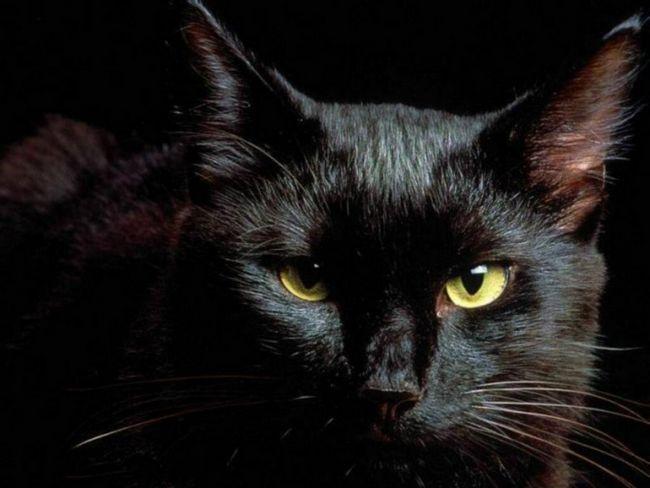 Чому вважають, що чорні кішки приносять нещастя