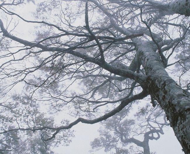 Чому важливі дерева
