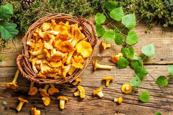 Корисні властивості грибів